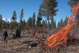 Burning a restoration slash pile. (Photo by NCC)