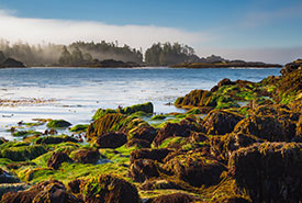 Low tide kelp forest (Photo by Mark Smith, Flickr)