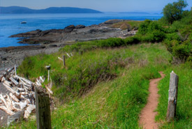 Brooks Point coastline trail (Photo by Adam Taylor)