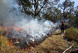Dry grass burns at Cowichan Garry Oak Preserve (Photo by NCC)