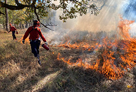 Prescribed burn at Cowichan Garry Oak Preserve (Photo by Pete Laing)