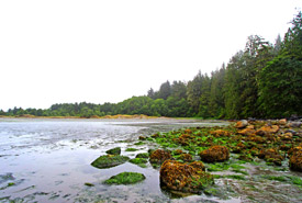 An intertidal zone on Clayoquot Island (Photo by NCC)