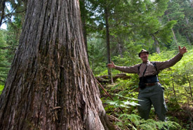 Retired Darkwoods forester Roland Meyers admires the giant trees on the property (Photo by Bruce Kirkby)