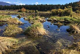 Once a farm field, now a new wetland (Photo by NCC)