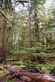 Kumdis old-growth forest (Photo by NCC)