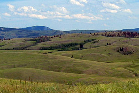 Green grassland, Frolek, British Columbia (Photo by NCC)