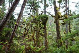 Gullchucks forest (Photo by NCC)