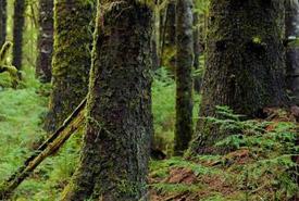 Haida Gwaii, British Columbia (Photo by Tim Ennis/NCC)