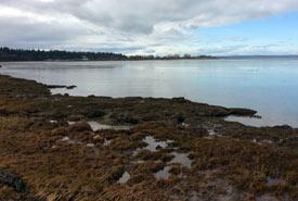 Mud Bay, British Columbia (Photo by NCC)