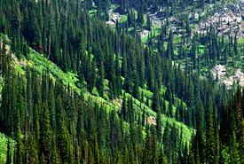 Valley view, Darkwoods, British Columbia (Photo by Tim Ennis/NCC)