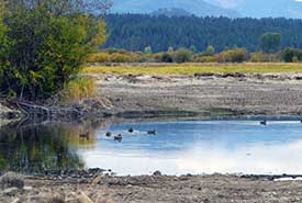 Ducks start using the new wetlands even before they are full (Photo by Carol Latter)