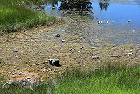 Garbage in the wetland at Lac du Bois (Photo by Cheyenne Bergenhenegouwen, BCWF Wetlands Workforce