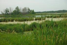 Blue Wing Wetlands, MB (NCC Staff)