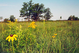 Prairie grassland, Manitoba (Photo by NCC)