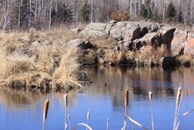 Boreal forest marsh, Whitemouth, Manitoba (Photo by NCC)