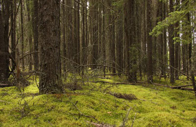 Boreal Forest, Whitemouth (Photo by NCC)