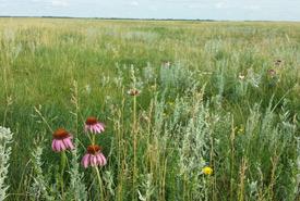 Grasslands (Photo by NCC)