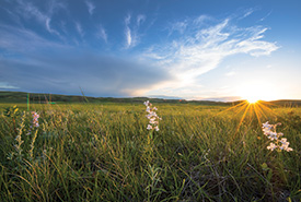 Grasslands in MB (Photo by Jason Bantle)