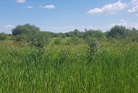 Marsh on Siglavik property (Photo by NCC)