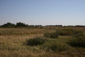 Milieux humides des fondrières des prairies, aire naturelle des prairies d'herbes mixtes de West Souris, Man. (photo de CNC)