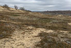 Sandhill prairies, East Parklands, MB (Photo by NCC)