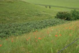 Prairie de la vallée de la rivière Souris, Man. (photo de CDC/CNC)