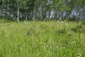 Tall grass prairie in NCC's Interlake Natural Area (Photo by Cary Hamel/NCC)