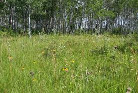 Prairie à herbes hautes, Aire naturelle Interlake (Entre-les-lacs), Manitoba (Photo de Cary Hamel/CNC)
