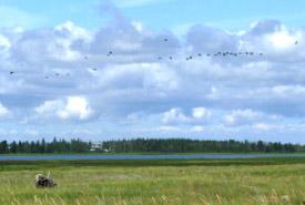 Réserve Naturelle de Pointe-à-bouleau, N.-B. (Photo par CNC)