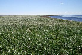 Île Tern, Tabusintac, Nouveau-Brunswick (photo de CNC)