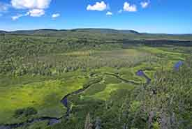 Black River Bog, NS (Photo by Mike Dembeck)