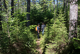 Past the lake along the trail, visitors are greeted by scattered mature pine, spruce, birch and hemlock trees. (Photo by Dan Hutt)