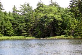 Bear Brook, Abraham Lake, Nova Scotia (Photo by  L. Campbell)
