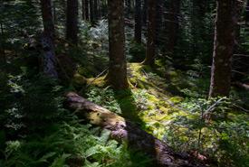 Abraham Lake, NS (Photo by Dan Hutt)