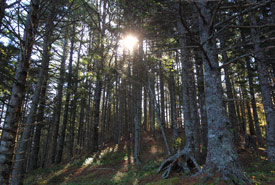 Forest along Long Tusket River, NS (Photo by Mike Dembeck)