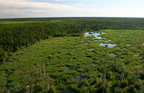Wood Buffalo National Park, Alberta & Northwest Territories (Photo by Parks Canada)