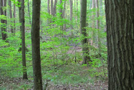 Backus Woods Addition, Southern Norfolk Sand Plain, ON (Photo by NCC)