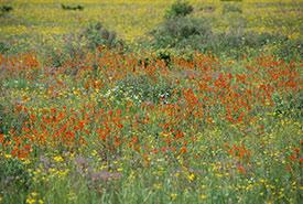 Flowers in Carden Alvar, ON (Photo by Bill Macintyre)