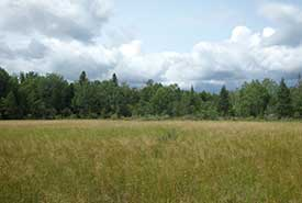 Carden Alvar Natural Area (Photo by NCC)
