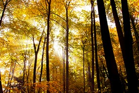 Happy Valley Forest, ON (Photo by NCC)