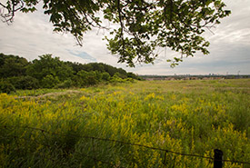 MacMillan Nature Reserve, ON (Photo by Wilson Chow)
