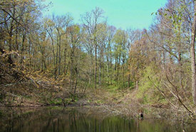 Lathrop Nature Preserve, ON (Photo by NCC)