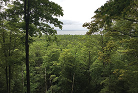 Maple forest, Cockburn Island, ON. (Photo by NCC)