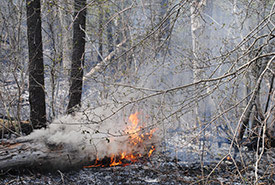 Prescribed burn on Hazel Bird property, Rice Lake Plains, ON (Photo by NCC)