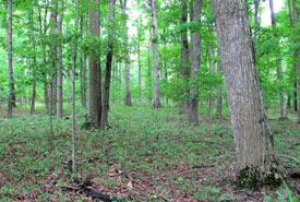 Point Abino Woods (photo de CNC)