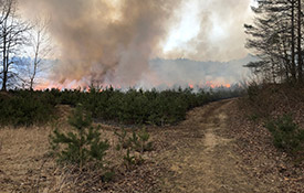 Southern Norfolk Sand Plain prescribed burn (photo by NCC)