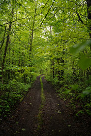 Salt Creek oak woodland, Rice Lake Plains, ON (Photo by NCC)