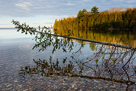 Shoreline, Vidal Bay, ON (Photo by Esme Batten)