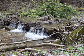 Waterfall, Creemore Nature Reserve, ON (Photo by NCC)