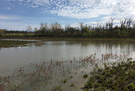 After wetland restoration, Pelee Island, ON (photo by NCC)